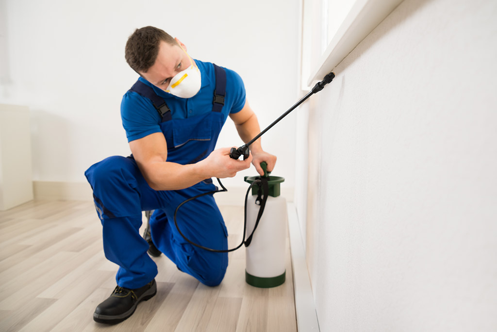 man from Alaska pest management company sprays under windowsill in residential home